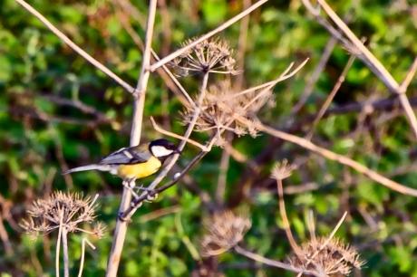 birds (1 of 3)