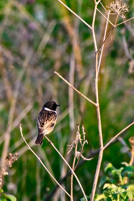 birds (2 of 3)