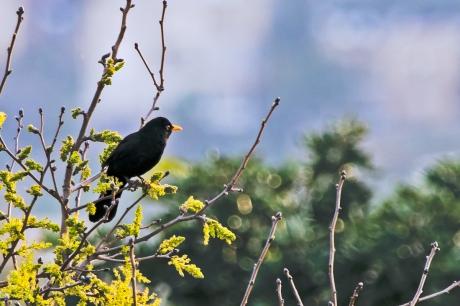 birds (3 of 3)