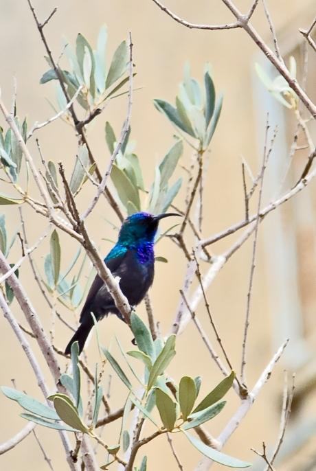 sunbird (1 of 3)