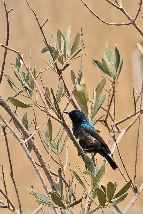 sunbird (2 of 3)
